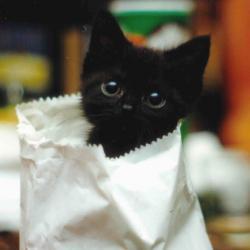 Kittens in Paper Bags